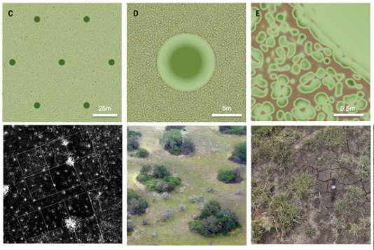 Modélisations (en haut) et images de termitières. A gauche, à grande échelle et vue du ciel ; au centre à l'échelle de chaque construction ; à droite, à l'échelle centimétrique et à l'extérieur de la termitière.