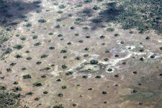 Lors de sécheresses persistantes, la biomasse se réduit à quelques taches de verdure, les termitières.