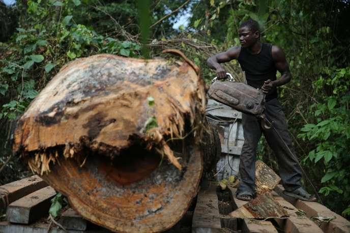 Exploitation forestière au Nigeria. Pierre A., homme d'affaires français, dit avoir fait fortune en achetant et revendant des forêts au Gabon et en Centrafrique.