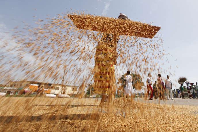 Une femme trie des grains de riz, en avril 2013.