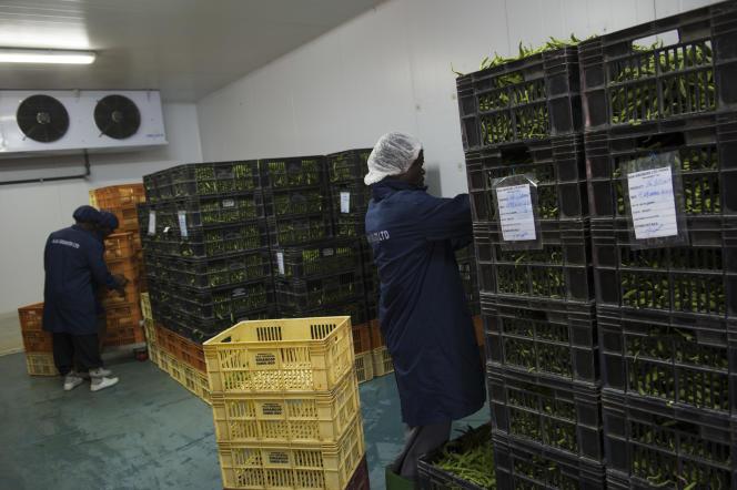 Les sacs de légumes frais quittent tous les jours l'entrepôt pour l'aéroport de Nairobi, d'où ils s'envolent chaque nuit vers l'Europe.