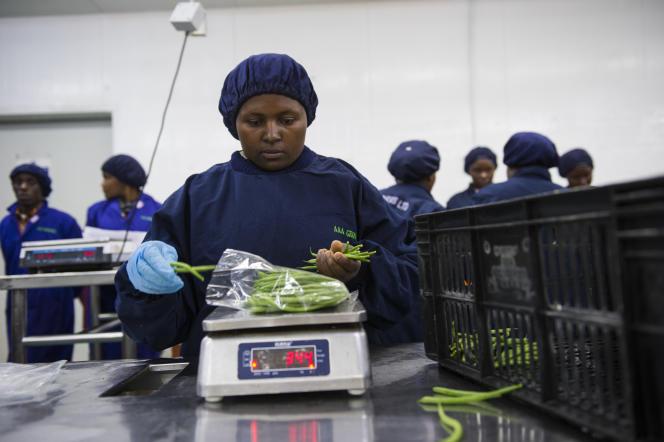 Une salariée doit peser chaque sac de haricots verts, de manière à obtenir 350 grammes.