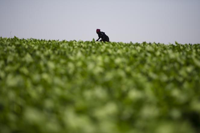 Les 150 000 fermes kényanes ont exporté, en 2014, 200 000 tonnes de légumes frais et transformés.