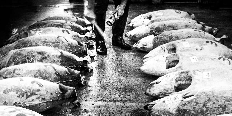 Le marché aux poissons de Tsukiji à Tokyo.