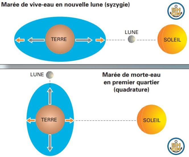 L'alignement de la Terre, de la Lune et du Soleil accroît l'attraction exercée sur les masses d'eau et est à l'origine des très fortes marées. Ce schéma ne tient cependant pas compte des phénomènes oscillatoires qui décalent les mouvement des masses océaniques.