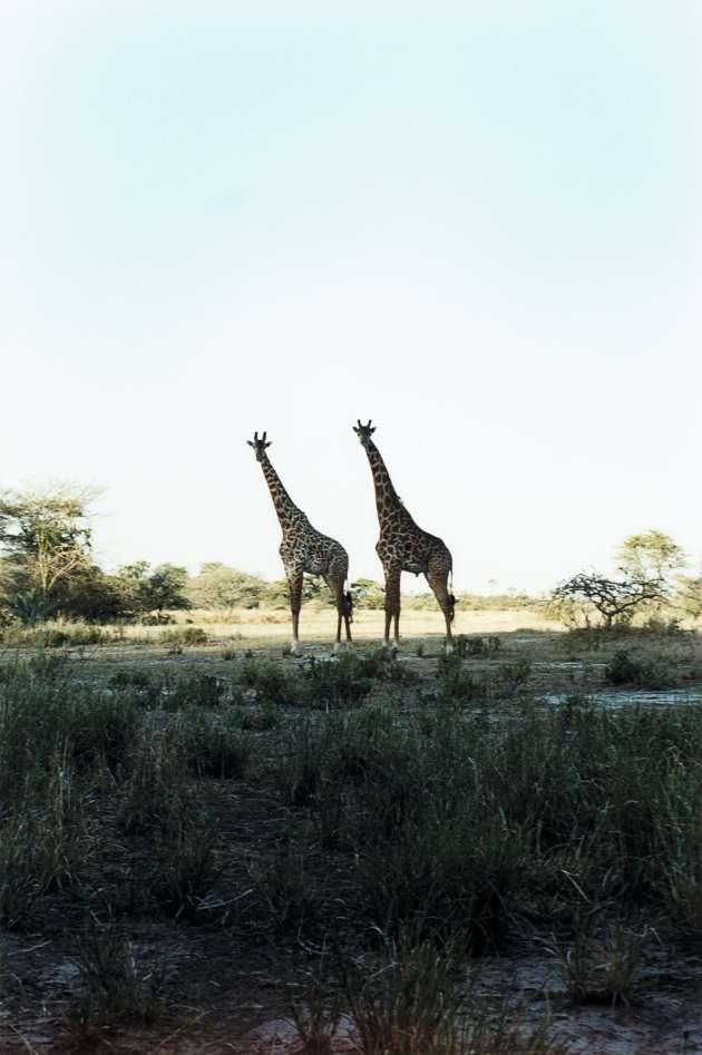 Loin des safaris permettant de voir en une journée les « Big five » - lion, léopard,  éléphant, buffle  et rhinocéros -, l'objectif est  d'être au plus près de la nature.