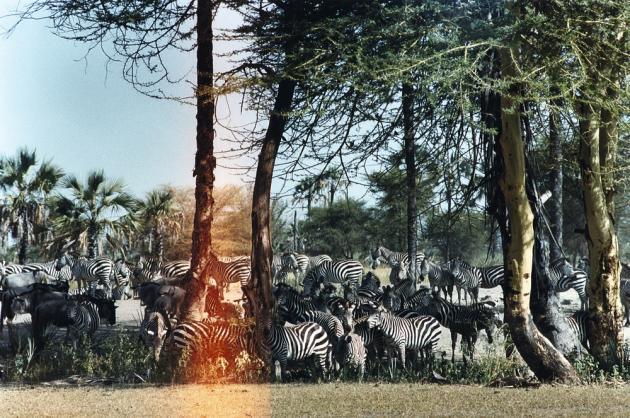 Ces nouveaux modes d'excursions permettent, avec de la chance et de la patience, d'approcher les animaux au plus près.