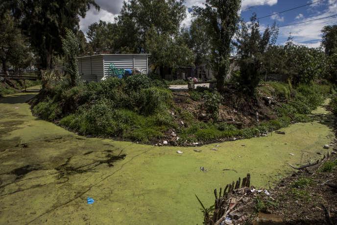 Un canal de Xochimilco, bordé d'habitations illégales et pollué par les ordures.