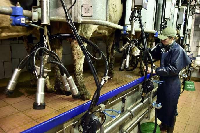 Une exploitation laitière à Bains-sur-Oust, en Ille-et-Vilaine.
