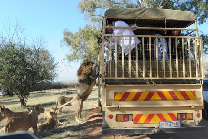 Dans un parc animalier d'Afrique du sud, en 2010.
