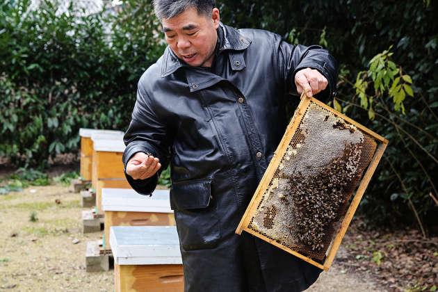 Le grossiste enlunettes Shang Zhong Xia, 62 ans, consacre du temps à l'apiculture, un art qu'il tient de son père (ici, au milieu deses ruches, près de son commerce aux entrepôts d'Aubervilliers).