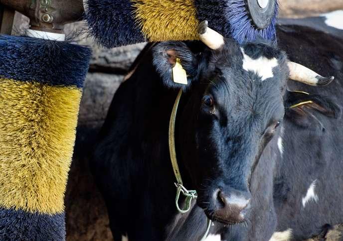 Avec 31 millions de tonnes produites, les Allemands sont les premiers producteurs de lait en Europe.