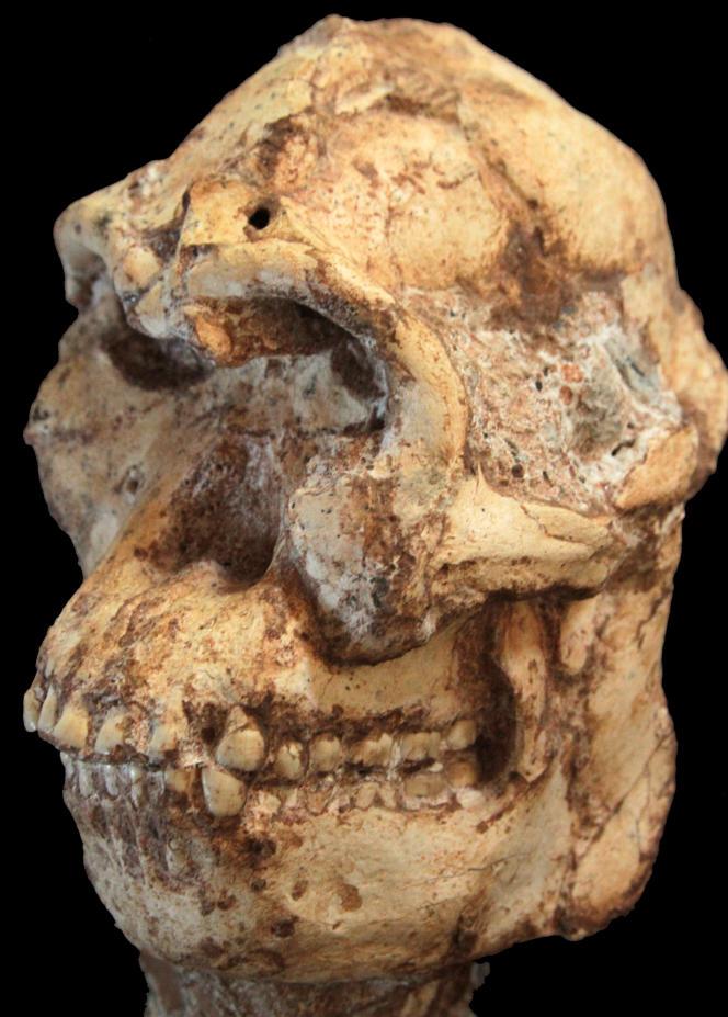 Le crâne de