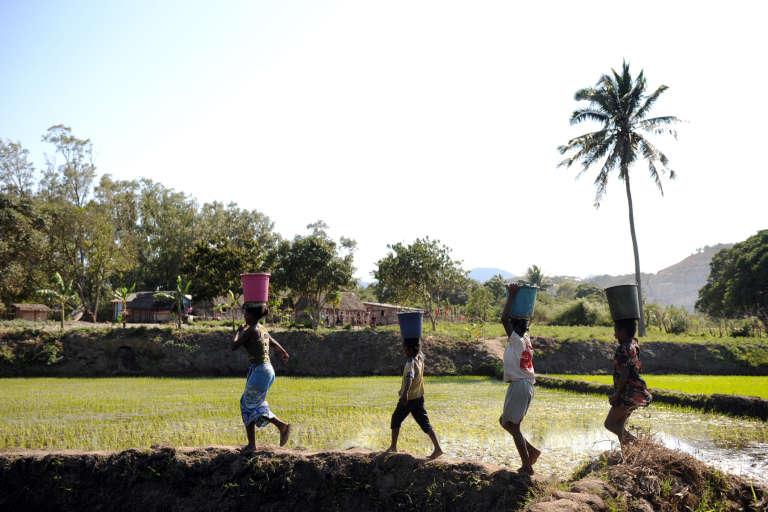 Des paysans traversant une rizière à Ehoala, près de Fort-Dauphin, Madagascar.