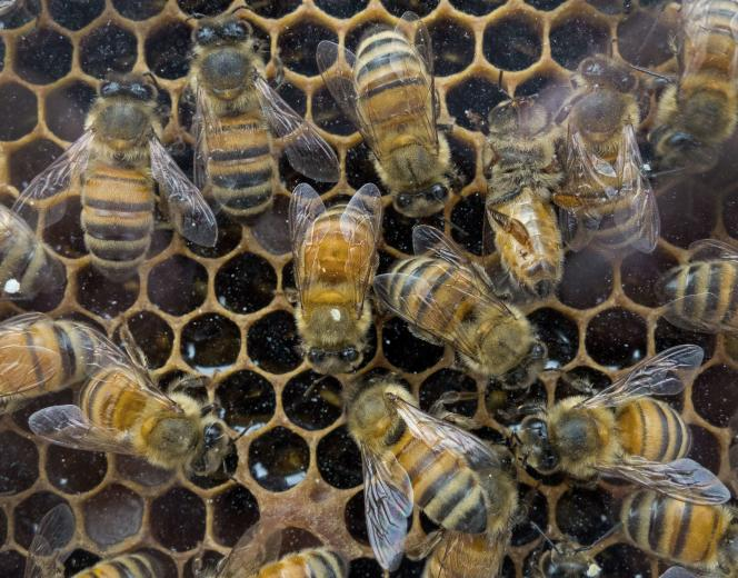 Une ruche produisant du miel de fleurs.