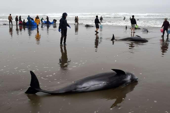 Munis de seau d'eau, certains secouristes essayaient d'empêcher la peau des dauphins de sécher.