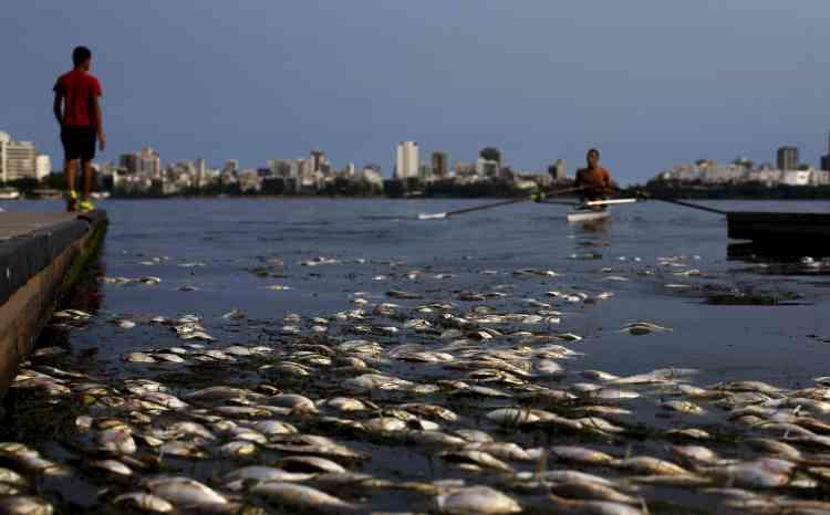 Des aloses (Allosa fallax) flottent à la surface du lagon de Rodrigo de Freitas, situé dans le sud de Rio de Janeiro. Le lac est le point de ralliement des amateurs de sports aquatiques comme le ski nautique ou l'aviron. C'est sur l'île de Caiçaras, au sud du lagon, qu'auront lieu les épreuves d'aviron et de canoë.
