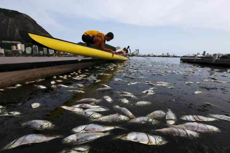 La municipalité affirme que le dernier épisode est le fruit des fortes pluies et du niveau élevé des eaux, qui a fait baisser la température du lac et tué les poissons, très sensibles aux variations de températures. Le niveau d'oxygène dans l'eau est normal, a-t-elle souligné. Certains spécialistes comme l'océanologue Paul Rosman mettent eux ces problèmes sur le compte de la hausse de dioxyde de carbone dans l'eau, liée à la pollution.