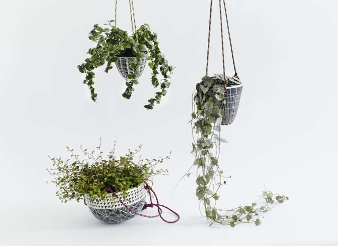 En l'air, chaîne des cœurs ou plante araignée sont mises en valeur.