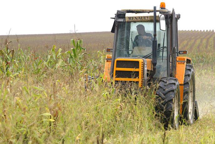 Bernard Pouey, agriculteur bio fauche pour détruire volontairement sa parcelle de maïs d'un demi-hectare