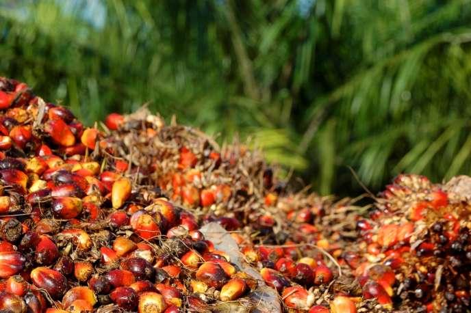 Les fruits du palmier à huile contiennent la graisse nécessaire à la fabrication de l'huile de palme.
