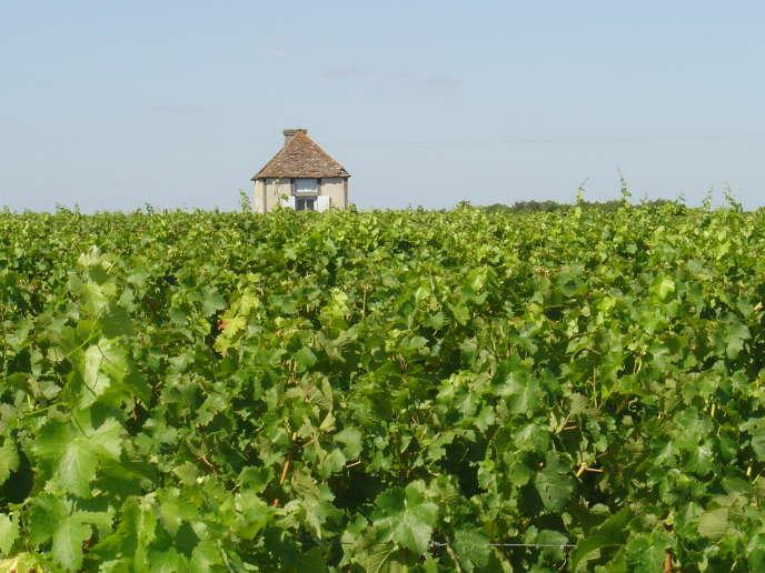 Des vignes en Indre-et-Loire.