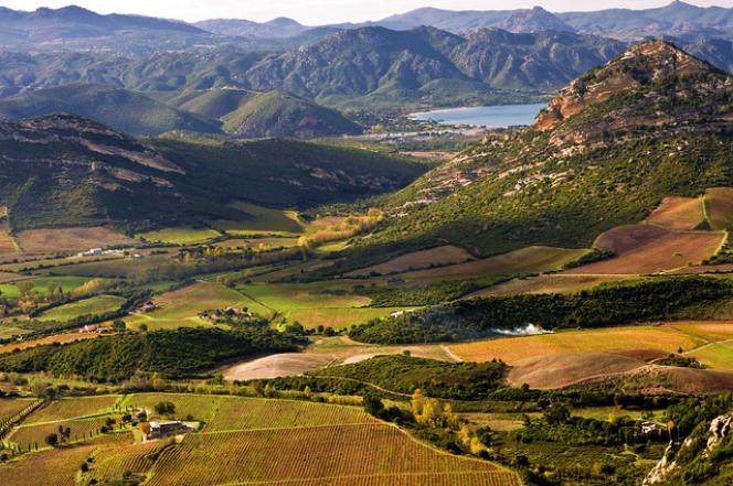 Les vignobles de Patrimonio, en Corse.