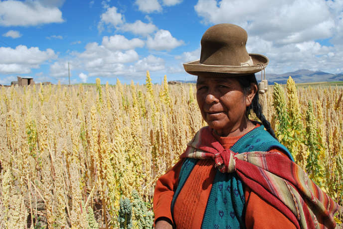 Le quinoa est cultivé sur les hauts plateaux andins de Bolivie.
