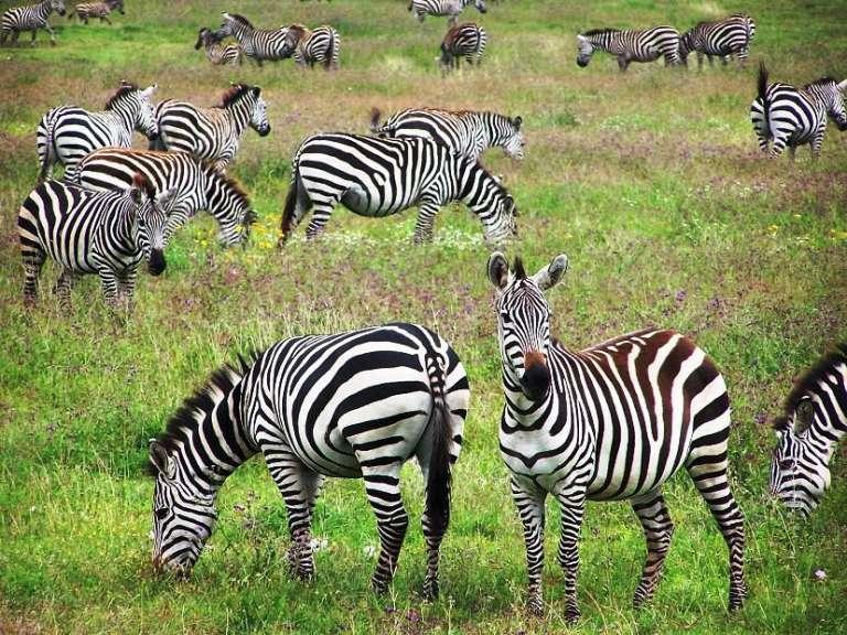 Zone de conservation de Ngorongoro (Tanzanie)