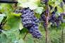 L'attrait des vins du monde étant contrebalancé par la tendance des Français à consommer local, les importateurs doivent jouer la pédagogie.