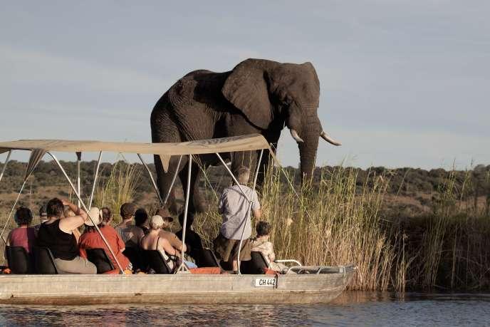 Groupe de touristes observant un éléphant au Botswana.