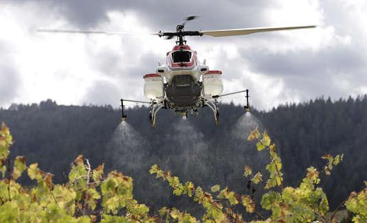 Un drône (le RMAX), hélicoptère sans pilote, démontre sa capacité à répandre sur un vignoble d'Oakville, en Californie, de l'eau mais aussi des pesticides et autres fertilisants. Le 15 octobre 2014.