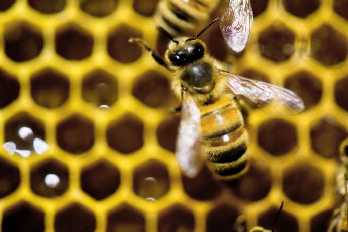 De plus en plus de start-up proposent des produits destinés aux apiculteurs.