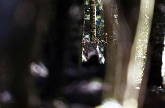 Dans le parc naturel du Mercantour, en novembre 2012.