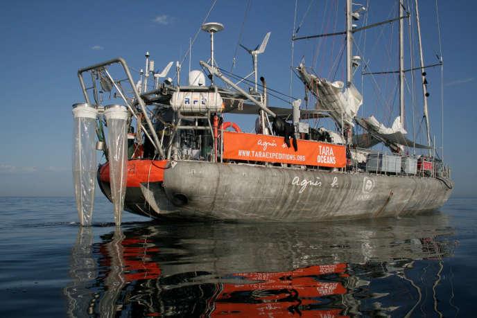 Le voilier Tara a déployé sept types de filets, jusqu'à 1000 mètres de profondeur, pour décrire la diversité planctonique.