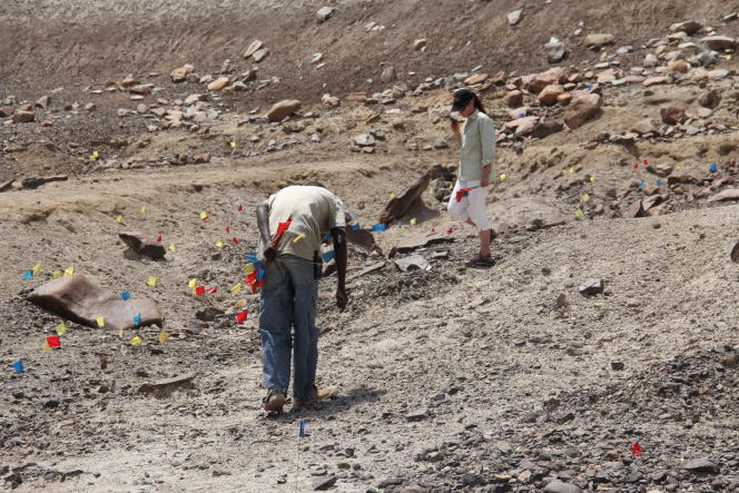 Sonia Harmand et l'un des prospecteurs de la mission archéologique plantent de petits drapeaux près des éléments qui méritent examen.