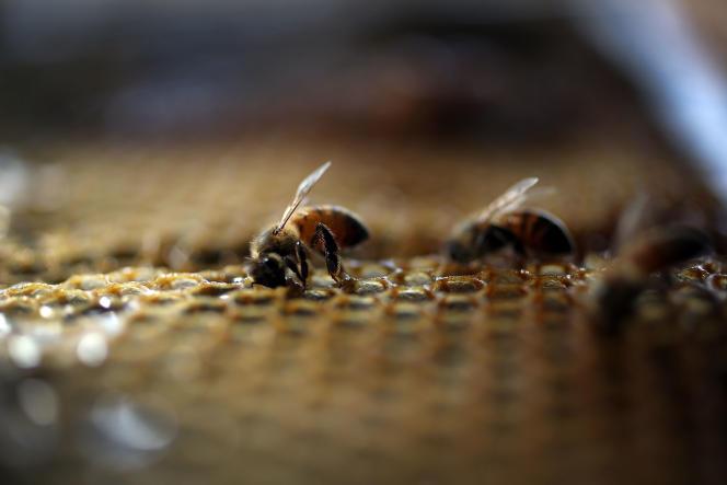 «Sans le travail des abeilles à miel, des abeilles sauvages et autres pollinisateurs, près d'un tiers de nos ressources alimentaires disparaîtraient»