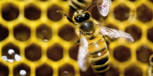 Les députés ont enfin tranché sur les néonicotinoïdes, cette famille de pesticides reconnus nocifs pour les abeilles et les insectes pollinisateurs.