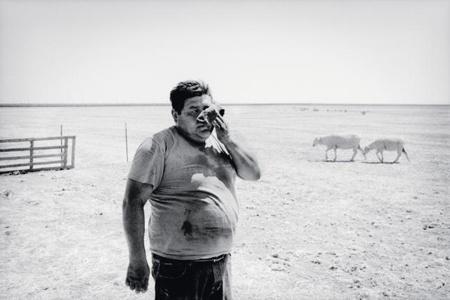 Un tondeur de moutons travaillant dans un champ desséché, à Huron (2010).