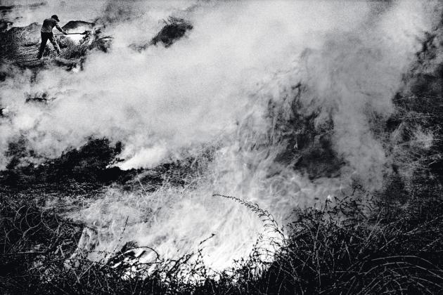 Un ouvrier agricole faisant brûler des buissons d'amarante, à Lamont (2010).
