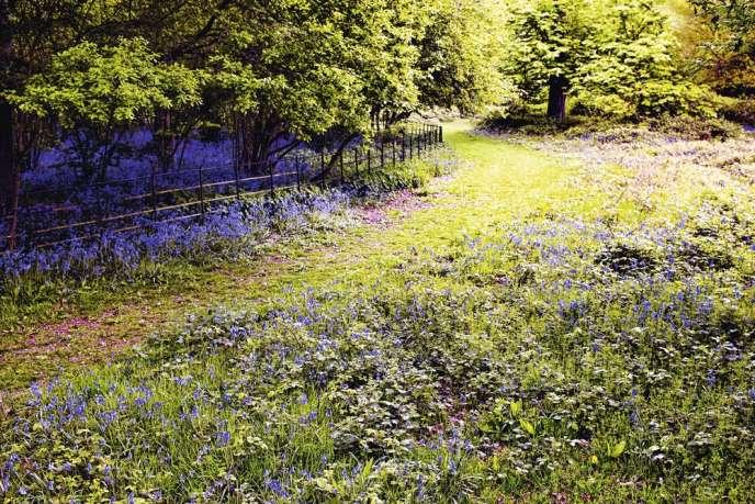 Au printemps, la nature offre une féerie de couleurs.