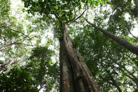 Forêt tropicale en Afrique centrale.