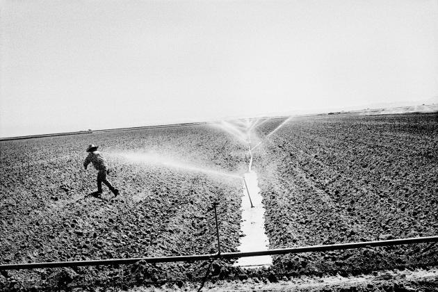 Arrosage d'un champ de tomates, à Huron (2010).