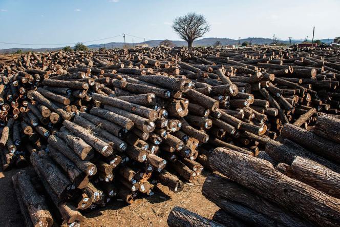 Stockage de troncs d'arbres au Mozambique.