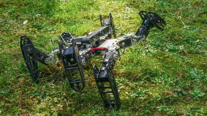 Le robot apprend à se déplacer avec l'une de ses six pattes cassée.