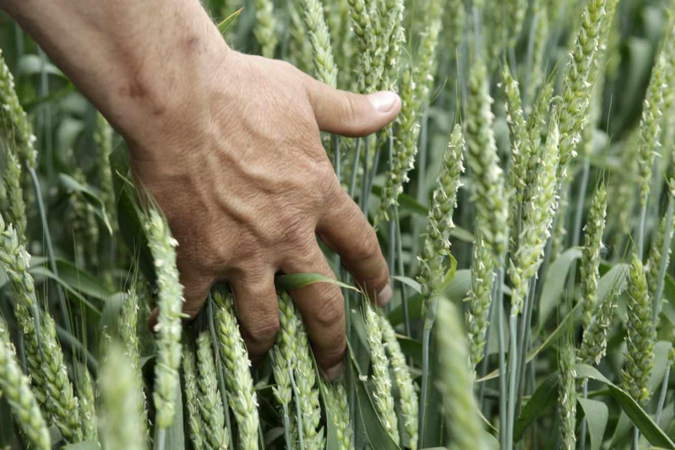 I frutti di cereali hanno provocato, in effetti, un nuovo declino Nell'indice dei prezzi alimentari della FAO.'indice des prix alimentaires de la FAO.