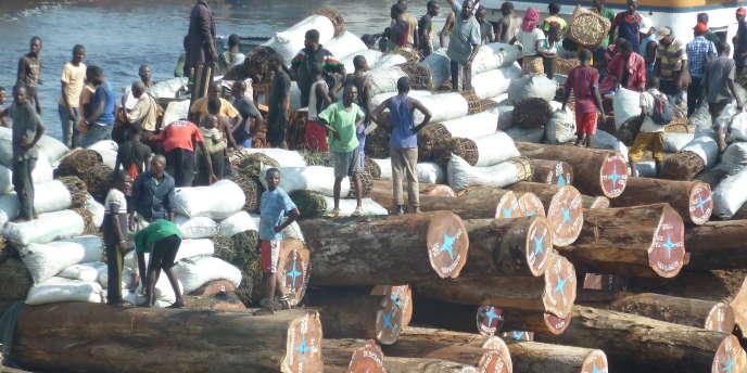 Grumes transportées sur le fleuve Congo en RDC, en direction du port de Matadi.