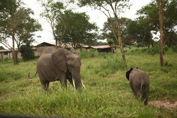 Eléphants en bordure du parc national de Mikumi au centre-est  de la Tanzanie, en février 2015.