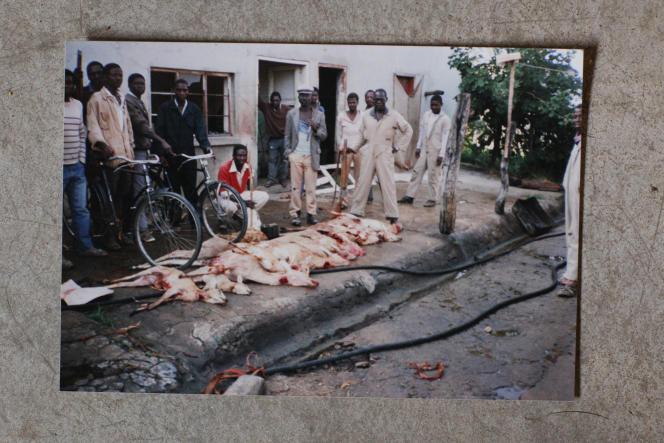 4 - Une photo tendue par l'employé d'une réserve montre les animaux capturés transportés sur des vélos.