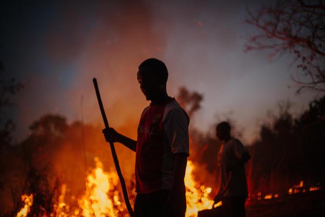 6 - L'employé d'une réserve garde un oeil sur le feu d'une herbe extrêmement sèche et construit un pare-feu afin d'éviter une propagation de celui-ci.